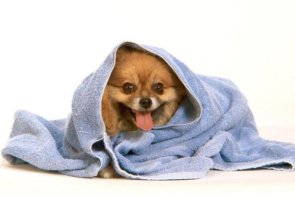 mojka shpica Мытье собак