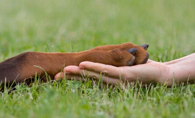 podstriganie kogtej u sobak Стрижка когтей у собак