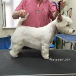 Стрижка собак и кошек в Пыхтино